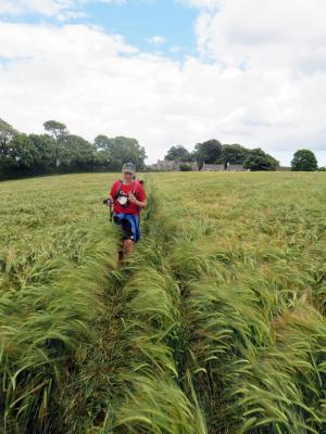 Tramping through the wheat field
