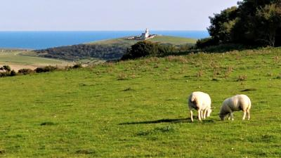 The final landmark in sight (but the sheep don't care)